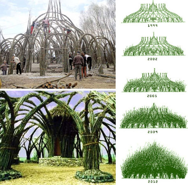 Living Willow Architecture